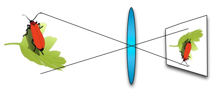 Esquema de como multiplica una imagen la lente