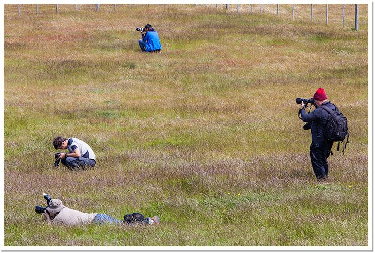 Fotógrafos en la hierba.