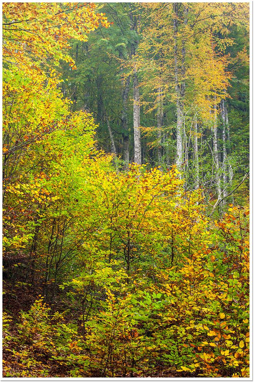 Otoño en Selva de Irati