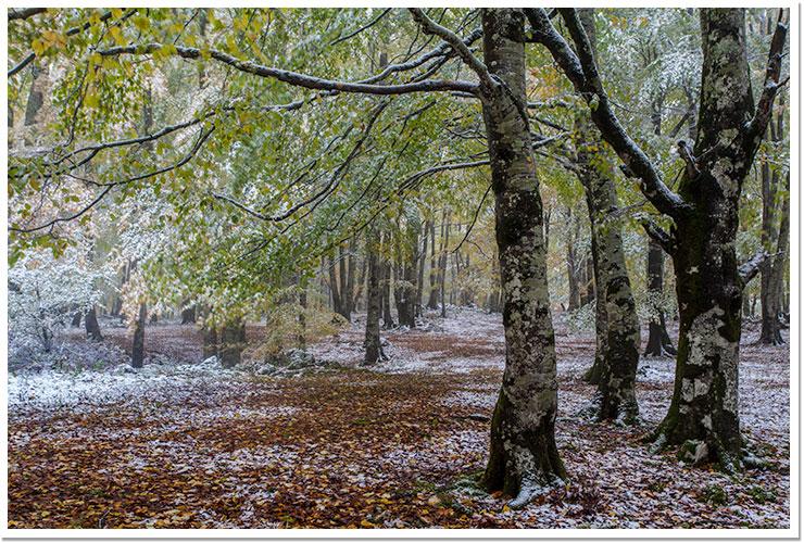 Nieve Otoñal en Urbasa
