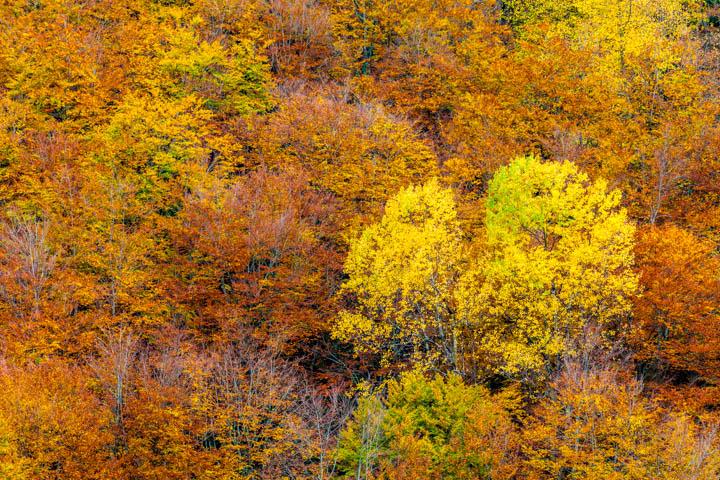 Lluvioso otoño en Val dArán