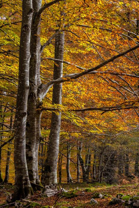 Otoño en los bosques de Urbasa