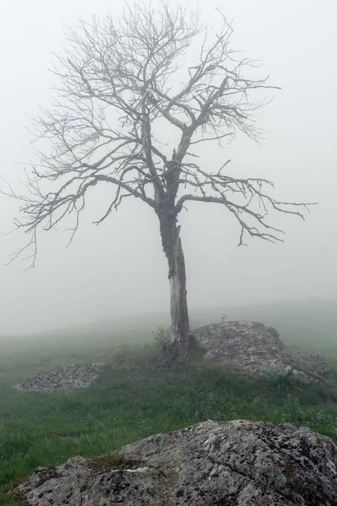 Nieblas en Varrados