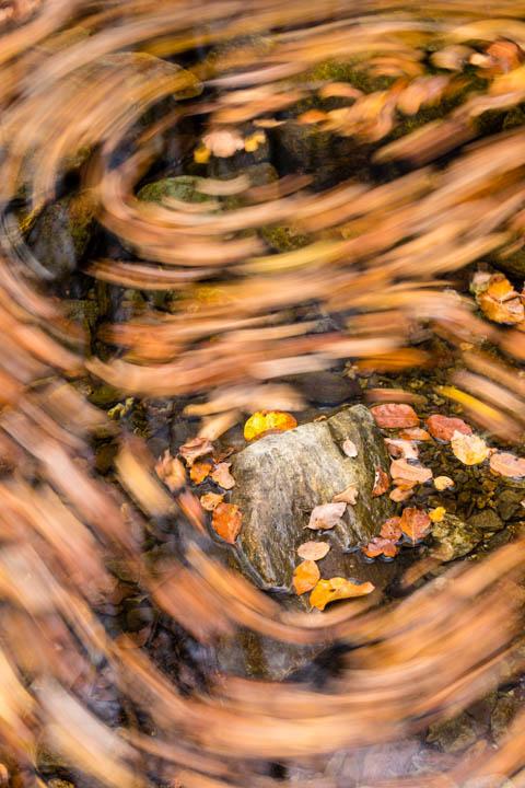 Espirales en el Montseny