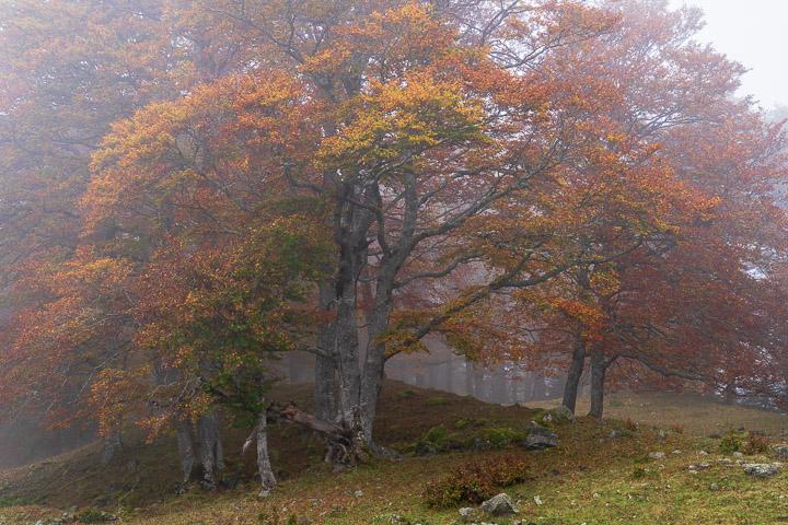 Nieblas otoñales en Val d'Aran