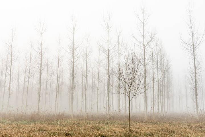 Amanecer con niebla en Sils